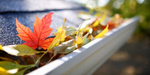 gutter n leaves