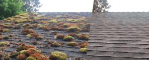 starlight roofs